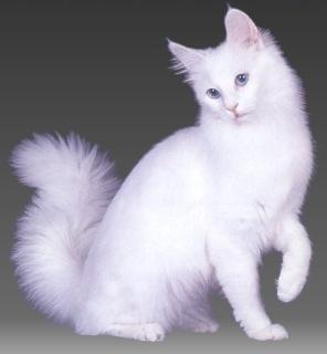 http://catclubs.narod.ru/Image1_1x1.jpg